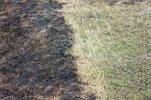 hierba-quemada-primavera_78450-460.jpg